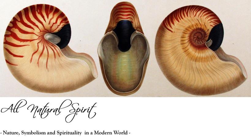 all-natural-spirit-nautilus-ss