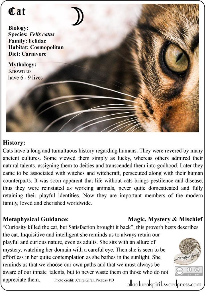 Spirit Animal Lore #1: Cat – Free OracleCard