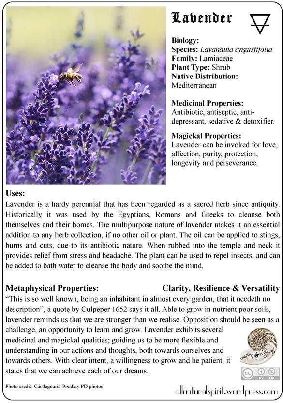 lavender, herbal, lore, meaning, properties, healing, medicinal, materia, medica, plant, guide, metaphysics, oracle, card