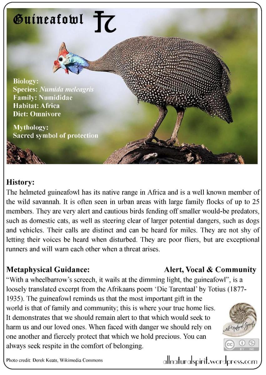 Spirit Animal Lore #2: Guineafowl - Free Oracle Card
