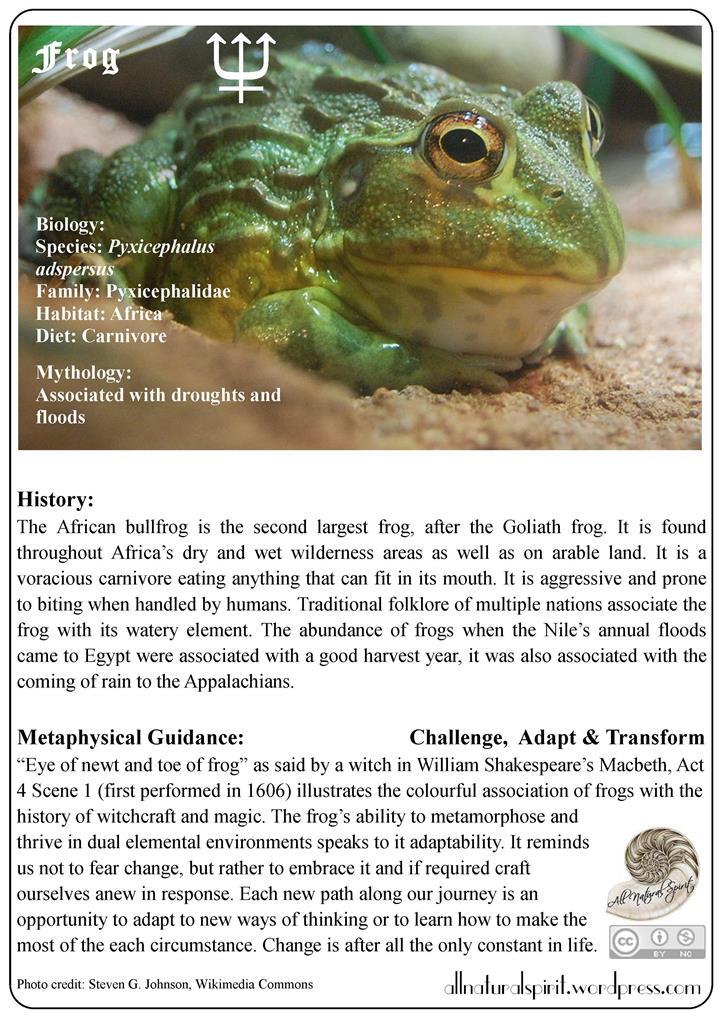 Spirit Animal Lore #3: Frog – Free OracleCard