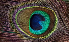Free, Download, Discreet Evil Eye Digital Protection Ward Peacock Feather