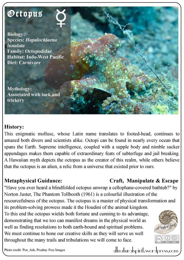 Octopus Spirit Animal Guide Totem Metaphysics All Natural Spirit Free Oracle Card allnaturalspirit.wordpress Online