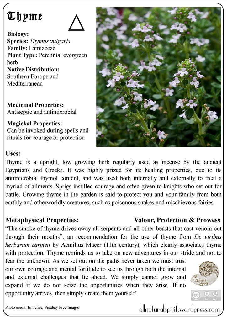 Thyme Courage Valour Protection Bravery Prowess Herbal Lore Magic Metaphysical Meaning Properties Healing Medicinal Materia Medica All Natural Online