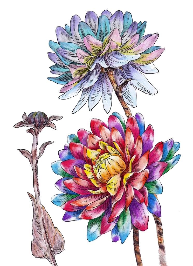 Rainbow, Chrysanthemum, Flower, Floral, Flora, Art, Design, Free, Wallpaper, hand colored, hand coloured, Background, Download, Mobile, Desktop