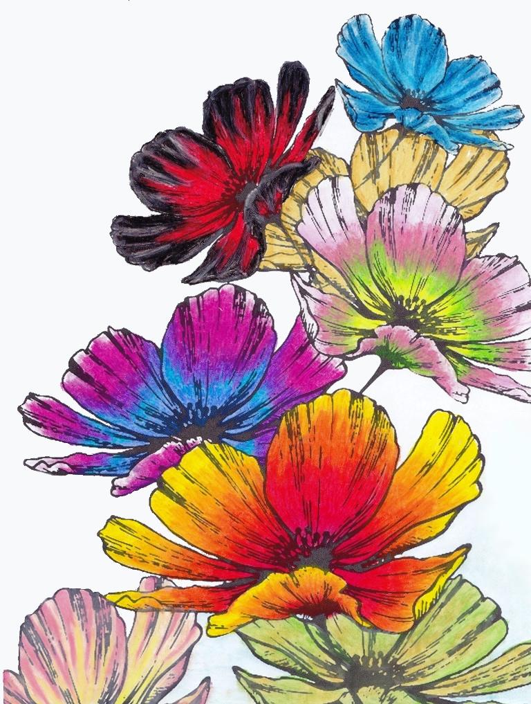 Poppy, Flower, Floral, Flora, Carnival, Art, Design, Free, Wallpaper, hand colored, hand coloured, Background, Download, Mobile, Desktop