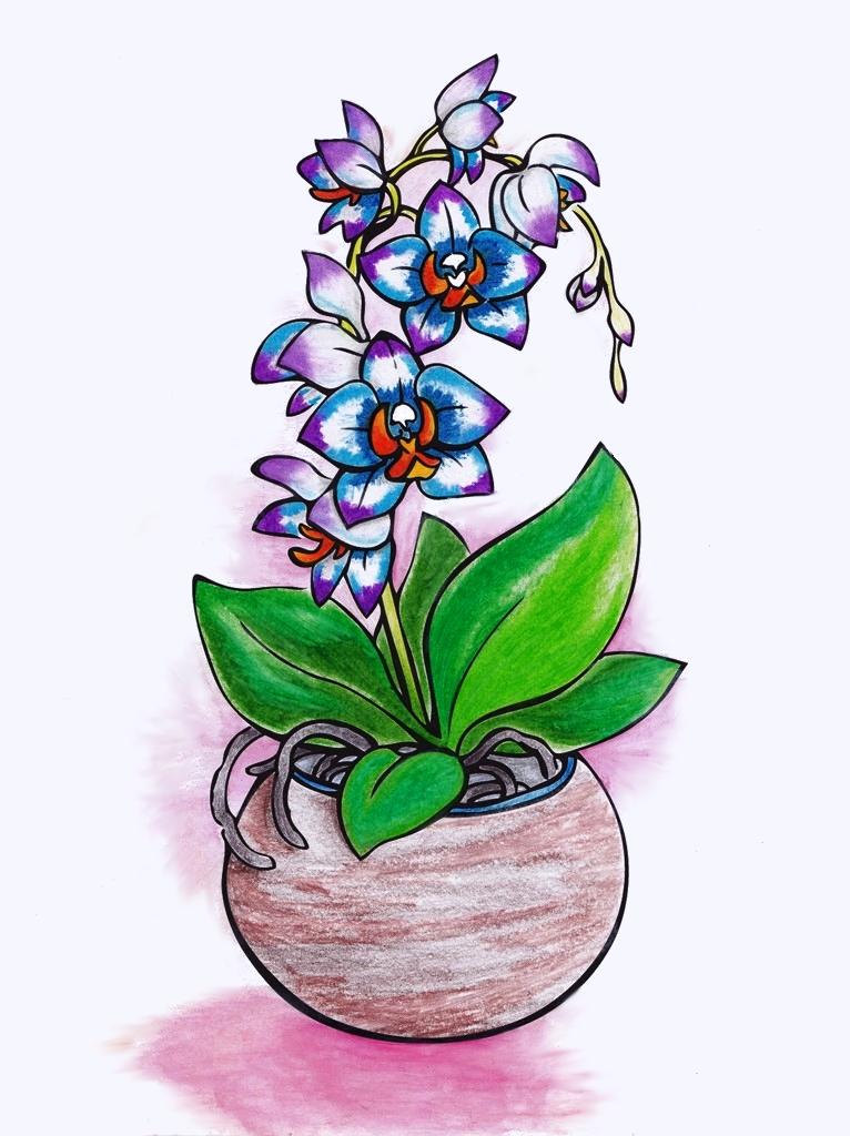 Snow, Orchids, Flower, Floral, Flora, Art, Design, Free, Wallpaper, hand colored, hand coloured, Background, Download, Mobile, Desktop
