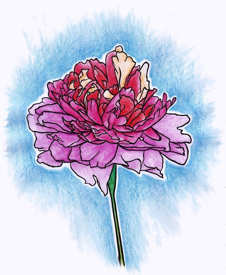Carination, Flower, Floral, Flora, Art, Design, Free, Wallpaper, hand colored, hand coloured, Background, Download, Mobile, Desktop
