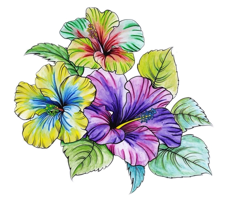 Hibiscus, Vivid, Bright, Rainbow, Flower, Floral, Flora, Art, Design, Free, Wallpaper, hand colored, hand coloured, Background, Download, Mobile, Desktop