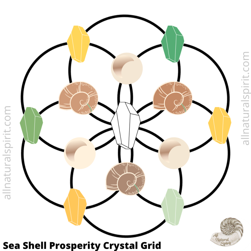 Sea Shell Prosperity  Crystal Grid Seed Of Life  All Natural Spirit