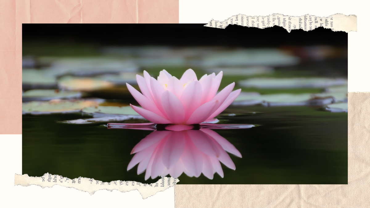 lily flower, lily pad, water, still, quite, meditation, mindfulness, water, reflection