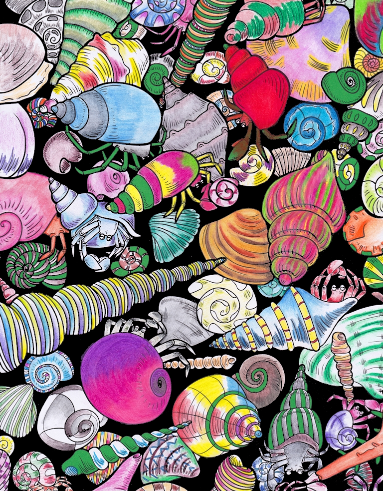 Sea Snails, Sea Shells, Fauna, Animal, Art, Design, Free, Wallpaper, hand colored, hand coloured, Background, Download, Mobile, Desktop